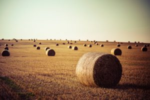 Rolls of hay across the Hays County countryside.